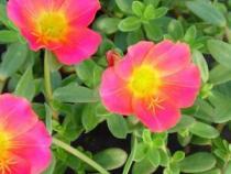 Plantas para zonas con mucho sol