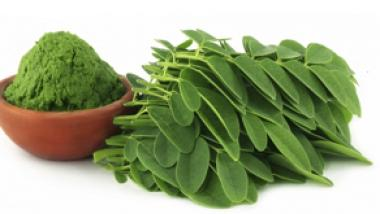 Los Múltiples Beneficios del Poderoso Árbol Moringa