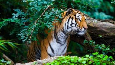 Top 12 Wildlife Destinations in India Today
