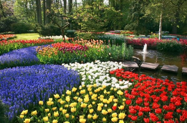 keukenhof-gardens-and-tulip-fields-tour-from-amsterdam-in-amsterdam-151996.jpg