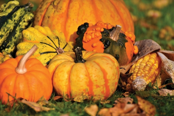 On gourd of the season