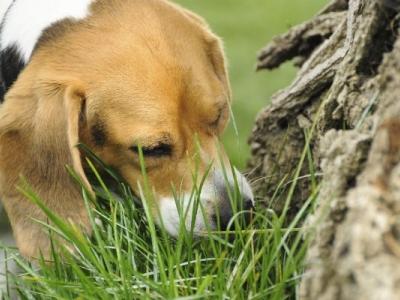 Why Do Dogs Like the Pomerania..