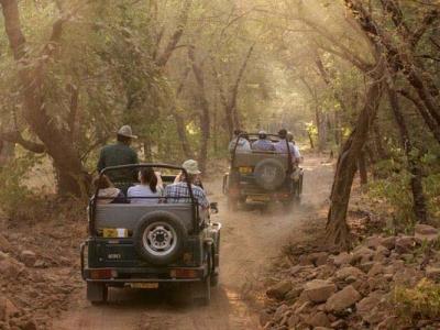 Jungle Safari in Jim Corbett N..