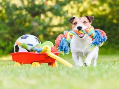Choosing Dog Toys