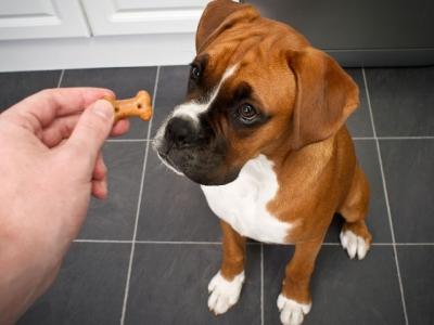 Choosing Dog Treats