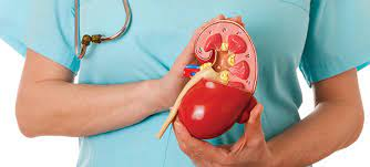 How Are The Kidney Doctors And..